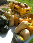 Packing up for our Farmer's Market