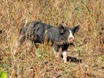 farmblog17