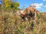 farmblog18