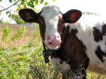farmblog21