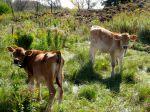 farmblog3