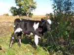 farmblog9
