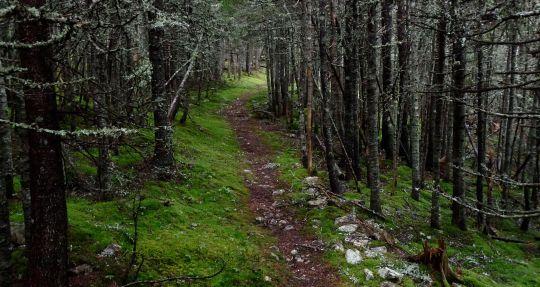 Avalon_Forest