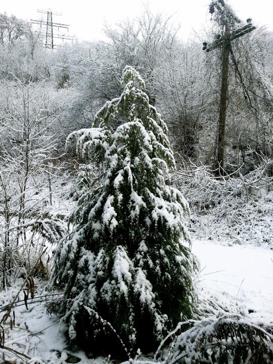 First Snow B