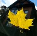 Leafonthewindsheild1