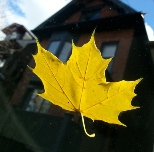 Leaf On The Windshield On A Sunday Morning.